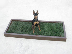 Regular Dog Potty