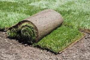 dog grass pad subscription in Orange County