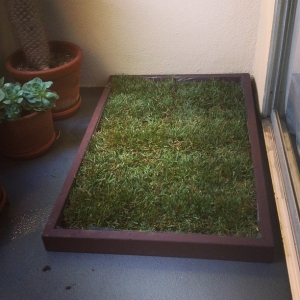 The Patio Dog Potty From Doggy And The City Los Angeles