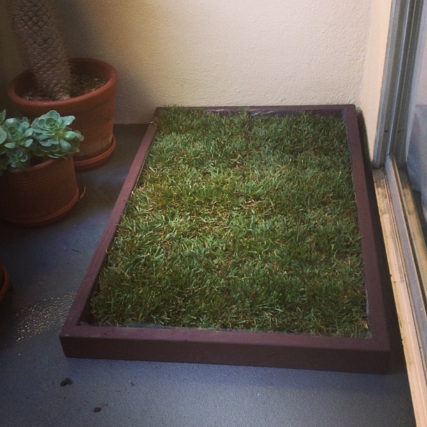 Dog Grass Box