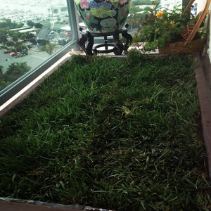 Dog Grass Delivery Los Angeles