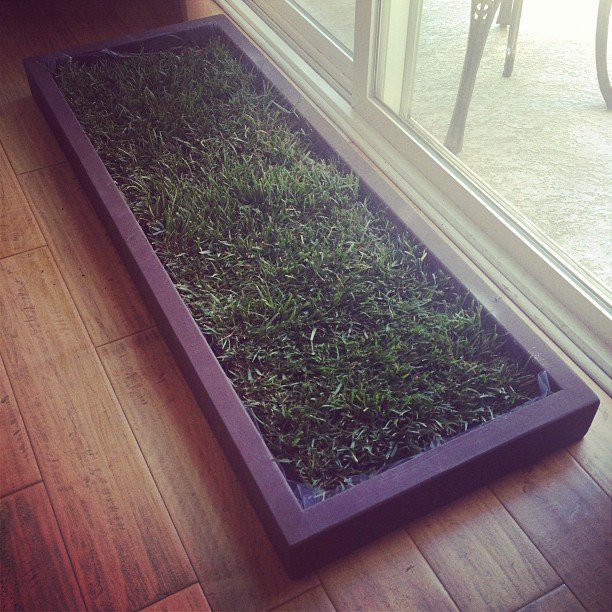 indoor dog grass