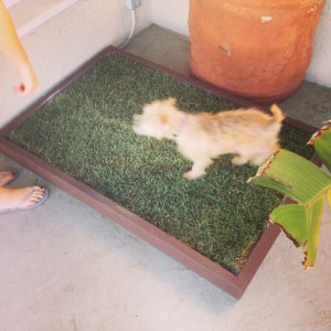 Indoor dog grass pad puppy potty training