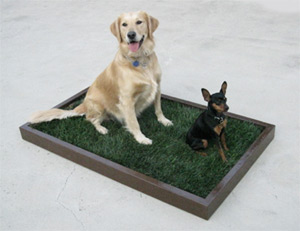 real grass indoor dog potty