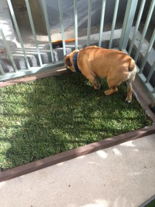 Los Angeles Indoor Dog Potty Grass