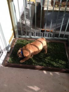 Grass Pad for Dogs to Pee on