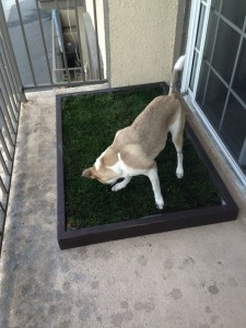 Grass Dog Potty Pad