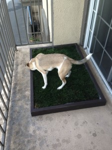 Dog grass pad for balcony