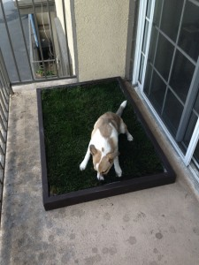 Dog Grass Pad Smell