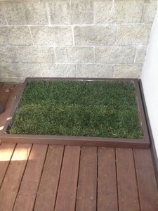 Potty Training Grass