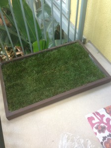 Grass Dog Potty Training For Apartment Living Doggy
