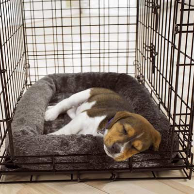 crate training for dogs 2018-08-18  dogs learn to love their crate as their very own special place/den it becomes a familiar and secure place, whether in the car, at a motel or a dog show, visiting, or just at home.