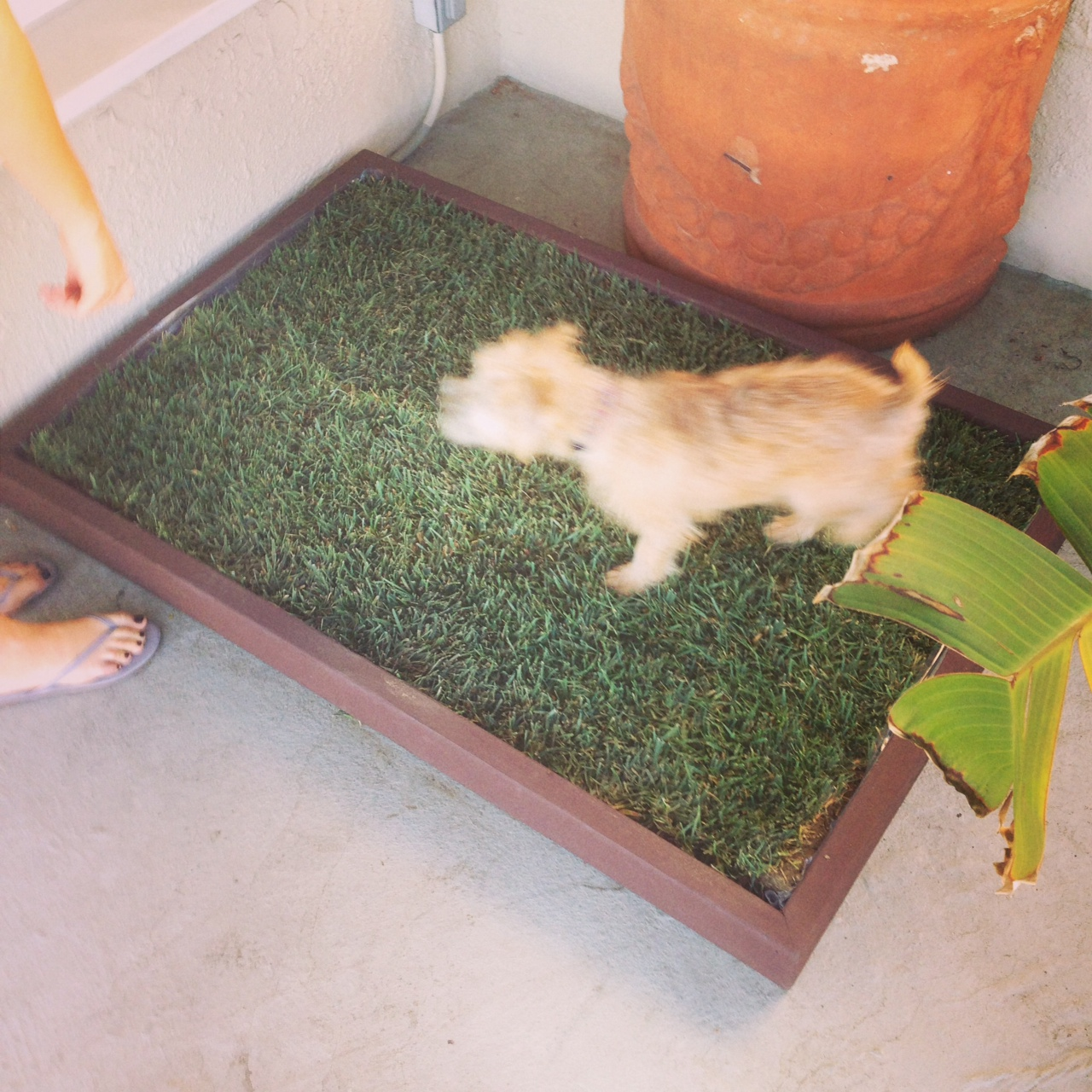 Building Your Own Grass Dog Potty Box