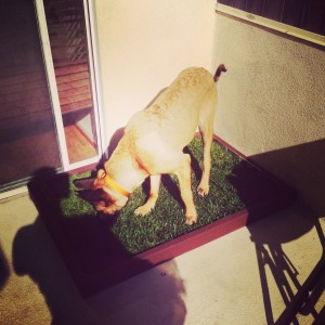 Grass dog potty for large dogs